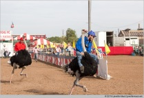 Chander, Arizona, USA. 11th March, 2016. Riders race ostriches at the 28th Annual Chandler Ostrich Festival. The yearly festival runs for three days and draws large crowds. © Jennifer Mack/Alamy Live News